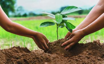 TyrFil Green Plant
